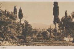 1919 - Ελαιώνας Γόρτυνας